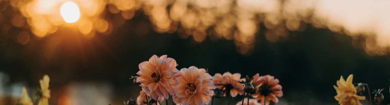 Large pink and yellow flowers silhouetted against a woodland at sunset