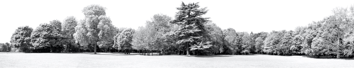 Black and white panoramic of a park with tall trees