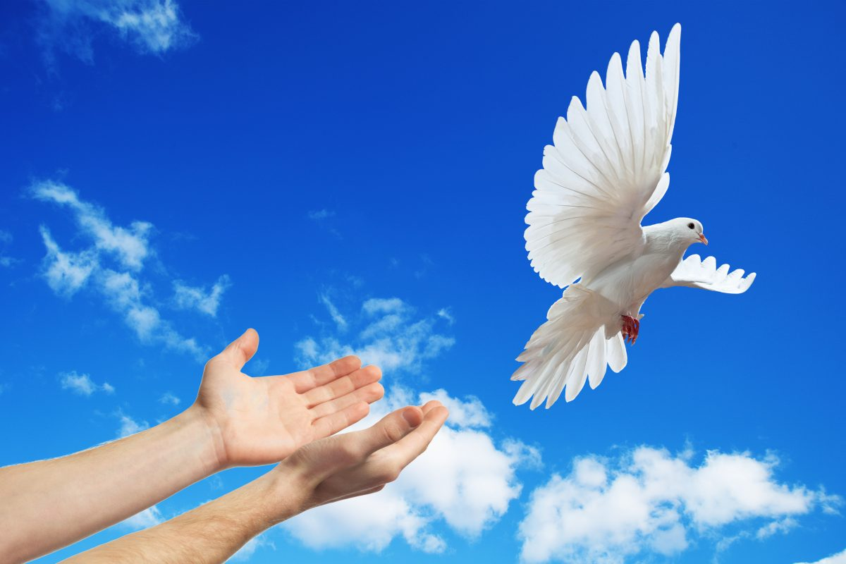 A white dove being released against a blue sky with white clouds